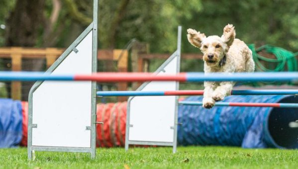 Agility Kurse in der Hundeschule Stormarn Dogs