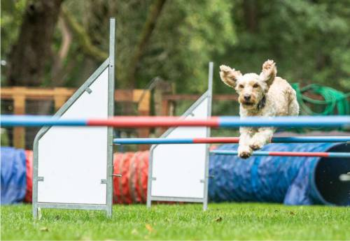 Agility-Kurse | Hundeschule Stormarn Dogs