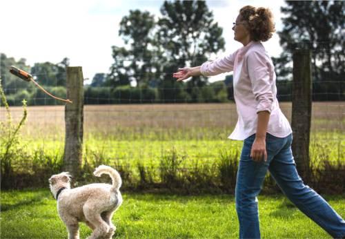 Alltagskurs Hundeschule Stormarn Dogs