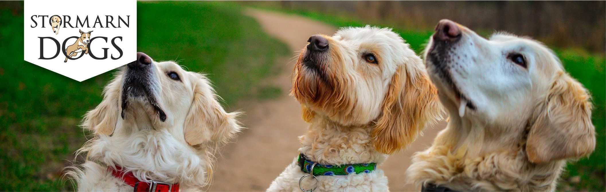 Hundeerziehung formt tolle Mensch-Hund-Teams | Stormarn Dogs