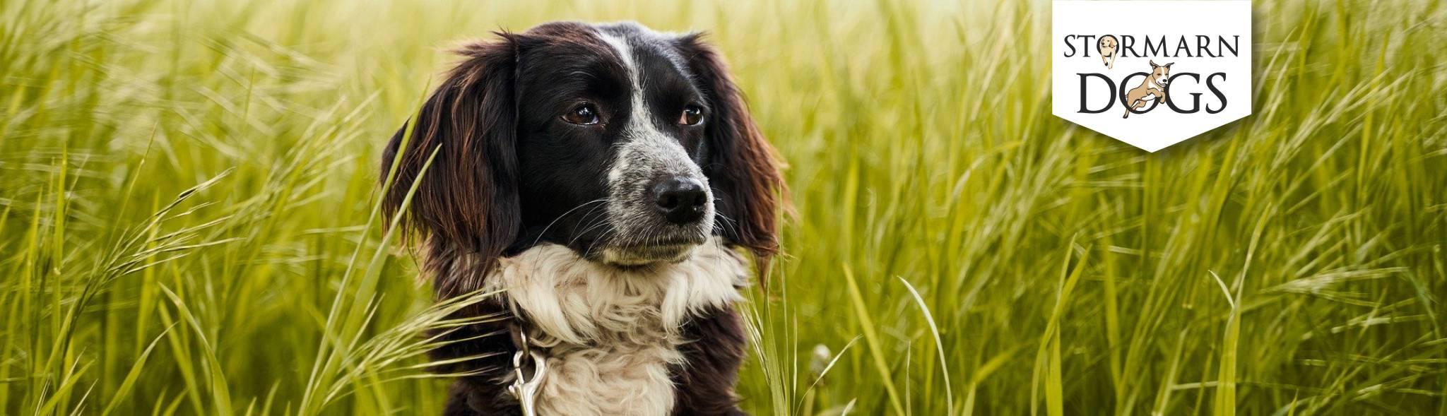 Unser Angebot von Agility bis Welpenspiel | Stormarn Dogs