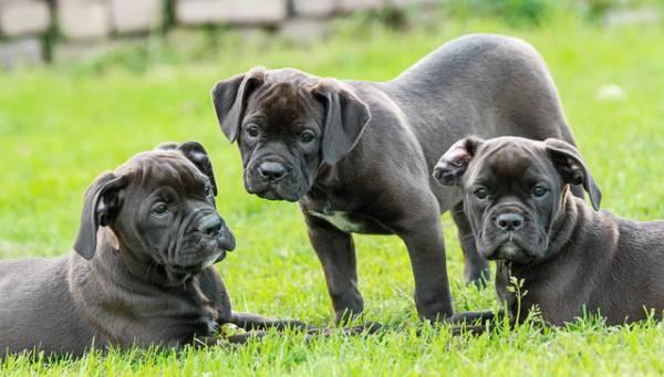 Welpenkauf Beratung | Stormarn Dogs