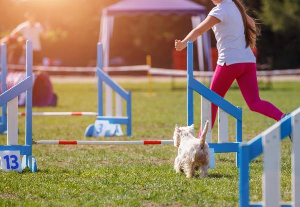 Agility für Kinder | Stormarn Dogs