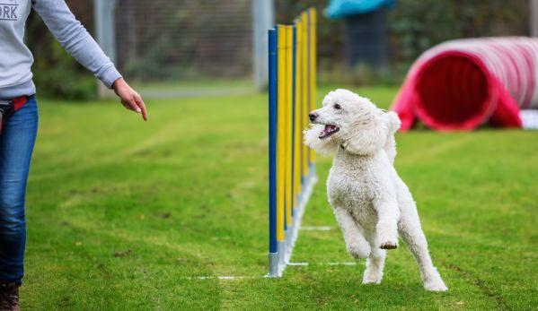 Agility Kurse mit Spaß-Faktor | Stormarn Dogs