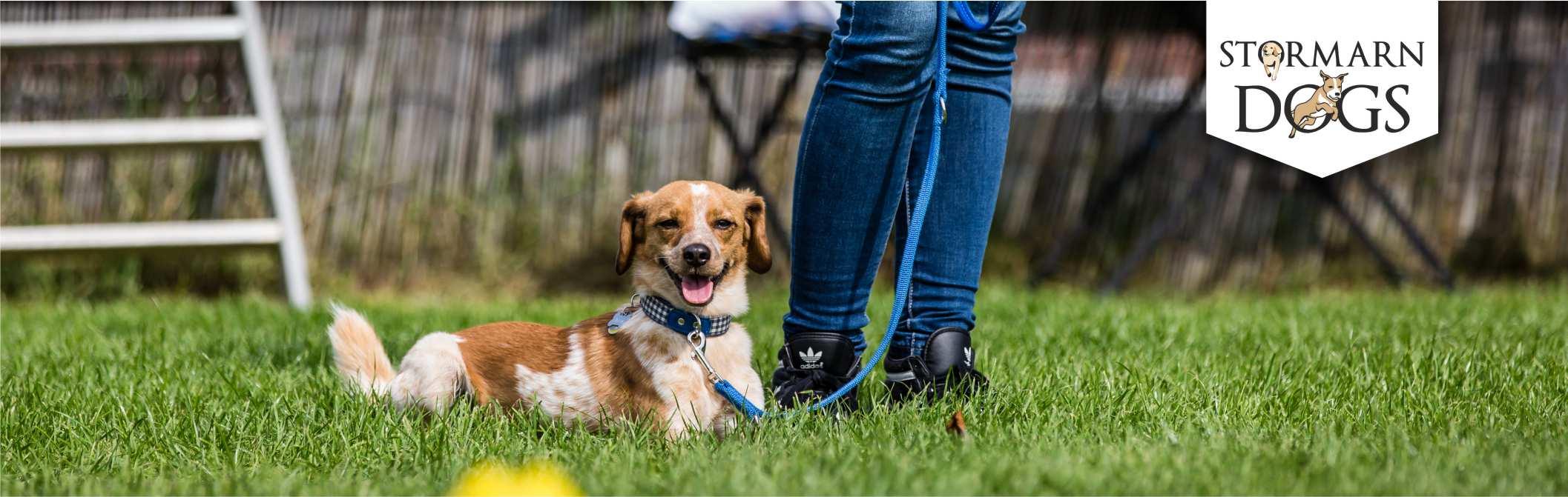 Aktuelles aus der Hundeschule | Stormarn Dogs