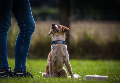Einzeltraining - Hundeschule Stormarn Dogs