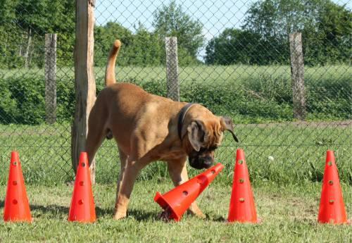 Junghunde Kurs | Hundeschule Stormarn Dogs