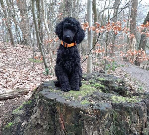 Pinuu - Hundeschule Stormarn Dogs