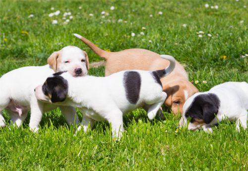 Welpen-Spiel und Welpenkurse | Stormarn Dogs