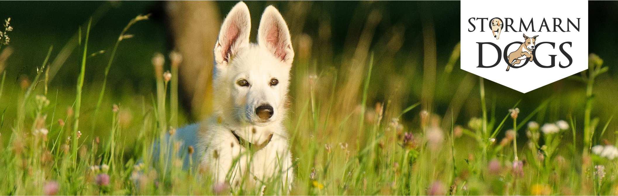 Hundeschule Stormarn Dogs Ammersbek