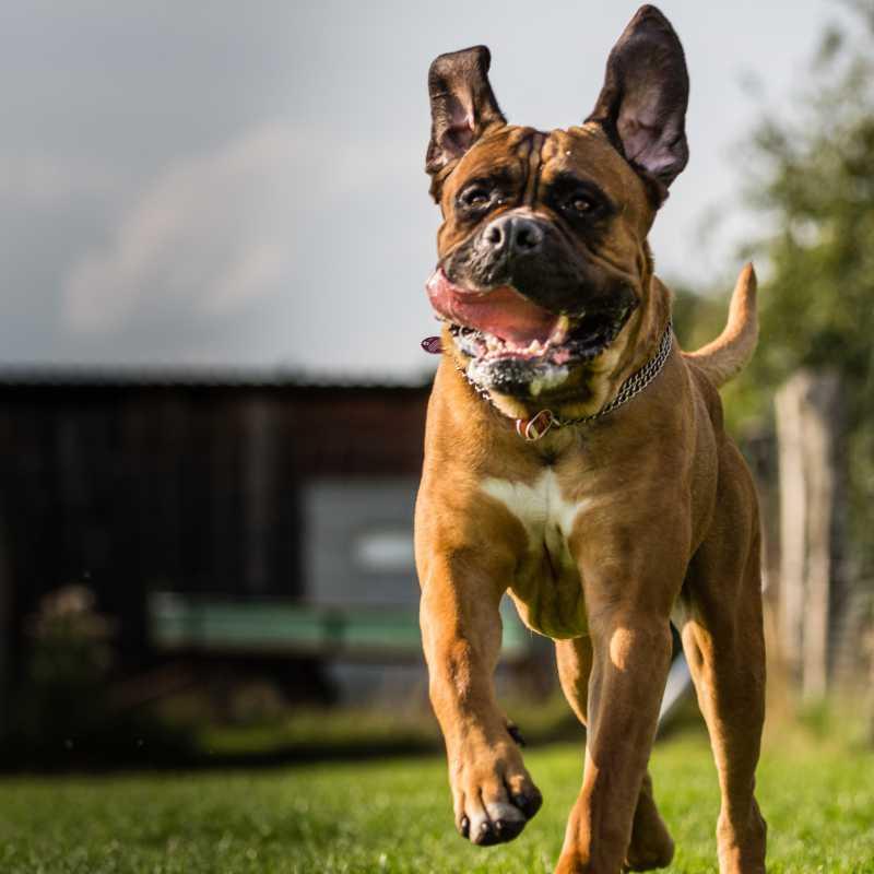 Hundeschule Stormarn Dogs - Astrid Stennei und Ben - Verhaltensberatung