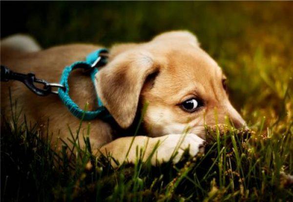 Welpenkurs 1 | Stormarn Dogs