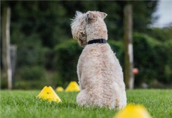 Alltagskurs - Hundeschule Stormarn Dogs